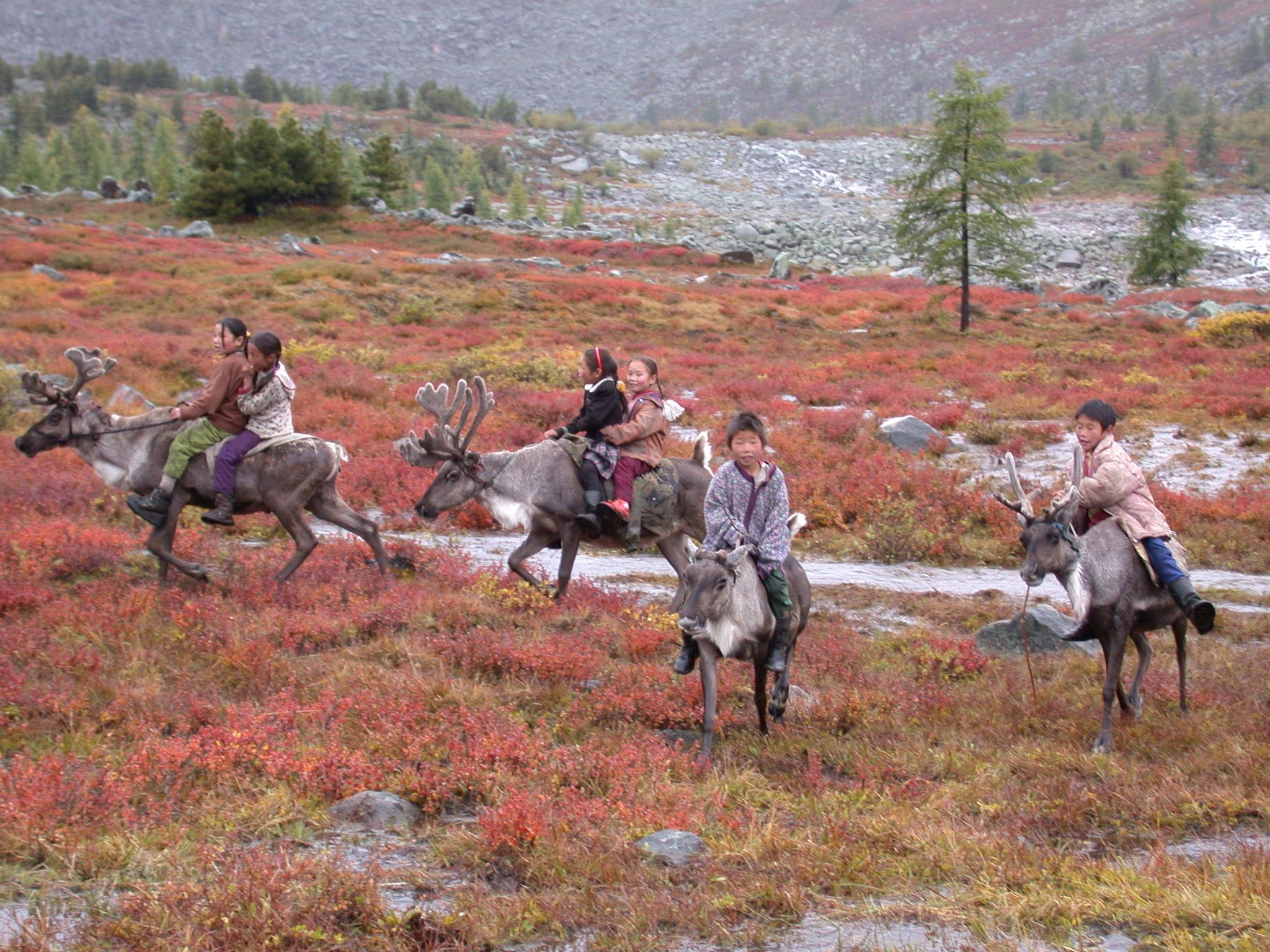 Tsaatan children riding reindeer in the fall pasture, Sarig gol, northern Mongolia, August 2003. Photo credit: Paula DePriest, Museum Conservation Institute, Smithsonian Institution.