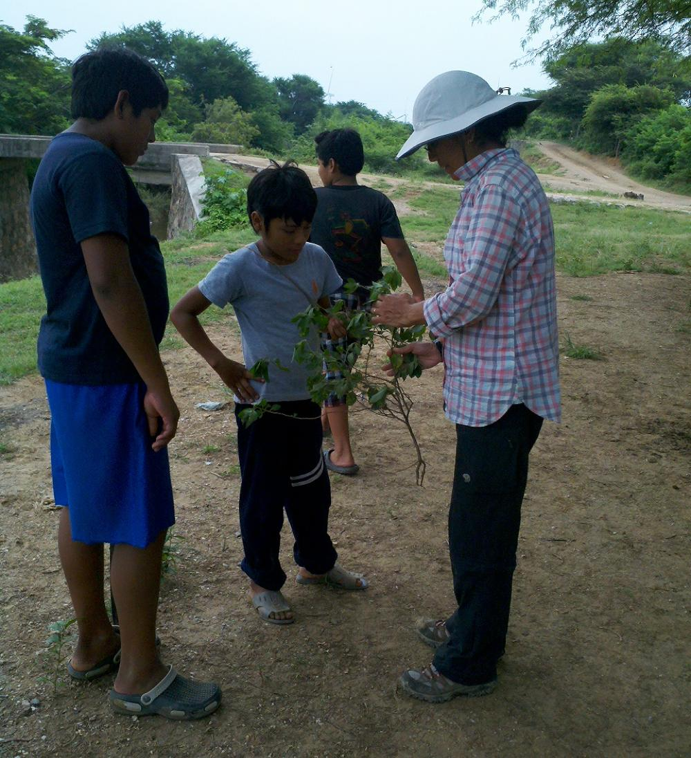 Researcher showing ethnobotanical specimen to children