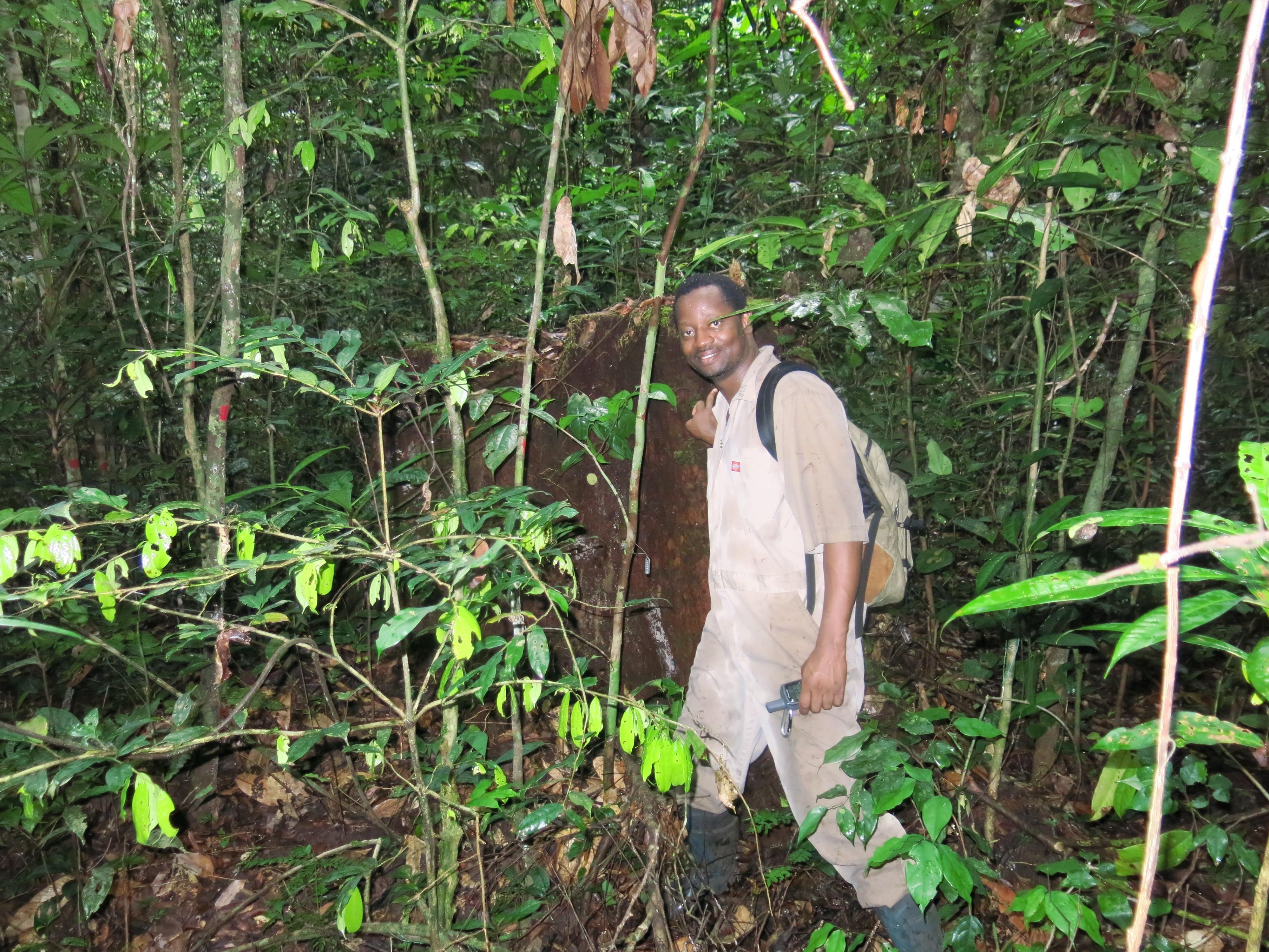 قطعة أرض حيوية بغابة رابي، مركز علوم الغابات الاستوائية التابع لسميثسونيان، قطعة أرض مخصصة للمراقبة الدائمة بغابة رابي، الحياة البحرية في أوغوي بالغابون، مايو 2015.   صورة من:   فريق سميثسونيان.