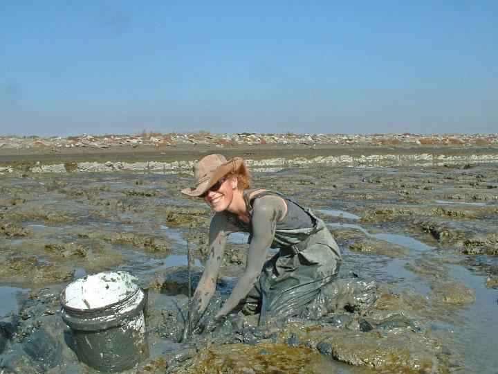 Lisa Schile in the field. It's dirty work measuring elevation change in wetlands. Photo credit John Callaway.