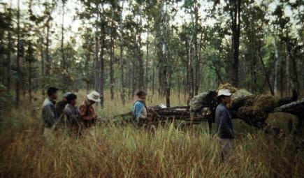 Researchers stand near fallen tree in tall grass