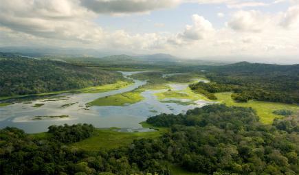 Paysage de marais et de forêts