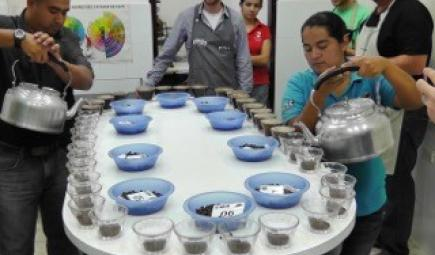 Trainees prepare coffee cups for tasting on a table