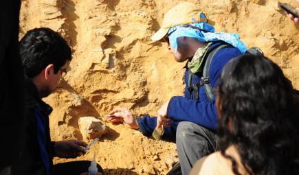 علماء الآثار يشيرون إلى فقرة حوت أحفوري في الصخور