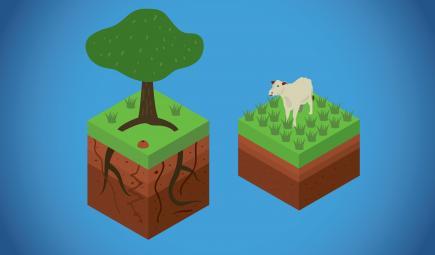Diagram showing climate benefits of trees versus pastureland
