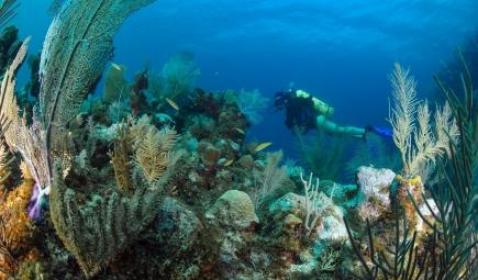 Underwater researcher swims by coral reefs