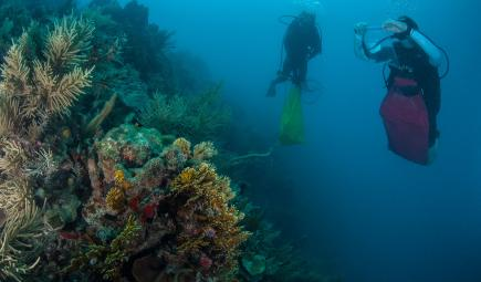 Underwater researchers collect marine specimens in bags