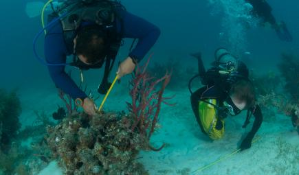 Underwater researchers measure coral reefs