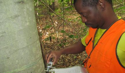 Ecologist using measuring tool to calculate intensive tree growth