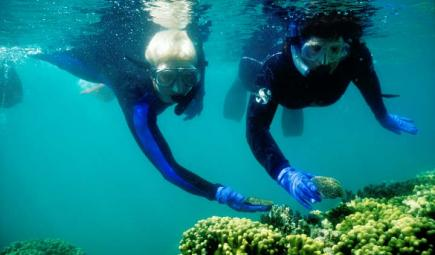 Researchers collecting coral reef samples underwater