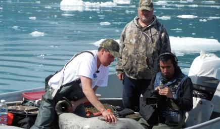 Researchers on boat examine shot harbor seal in Alaska