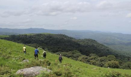 Survey team overlooking montane forests in Nigeria
