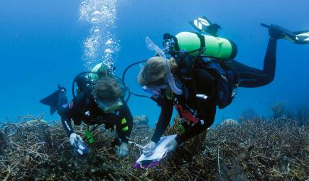 Researchers in dive gear study reef plot