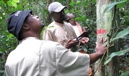 Ecologists examine a tree in the Rabi plot in Gabon