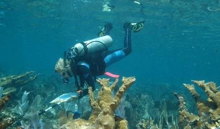 Researcher in dive gear surveys a coral reef