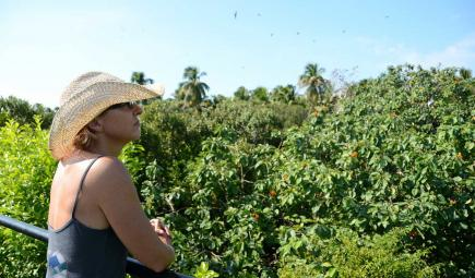 Scientist overlooking bird nests in marine protected area of Belize