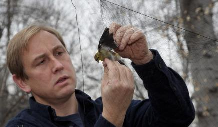 Conservation scientist holds bird caught in net