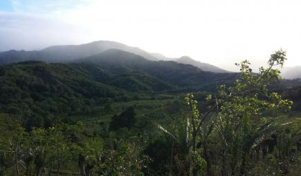 Shade-grown coffee plantation in forested mountains