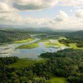 Green wetland and forest