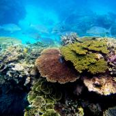 Fish swim behind a clump of coral