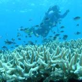 水下海洋生物学家正在研究鱼和珊瑚礁