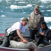 Des chercheurs examinent un phoque commun tué en Alaska sur un bateau