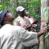 生态学家在观察加蓬拉比样地的树木