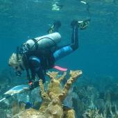 Un chercheur en tenue de plongée examine un récif corallien
