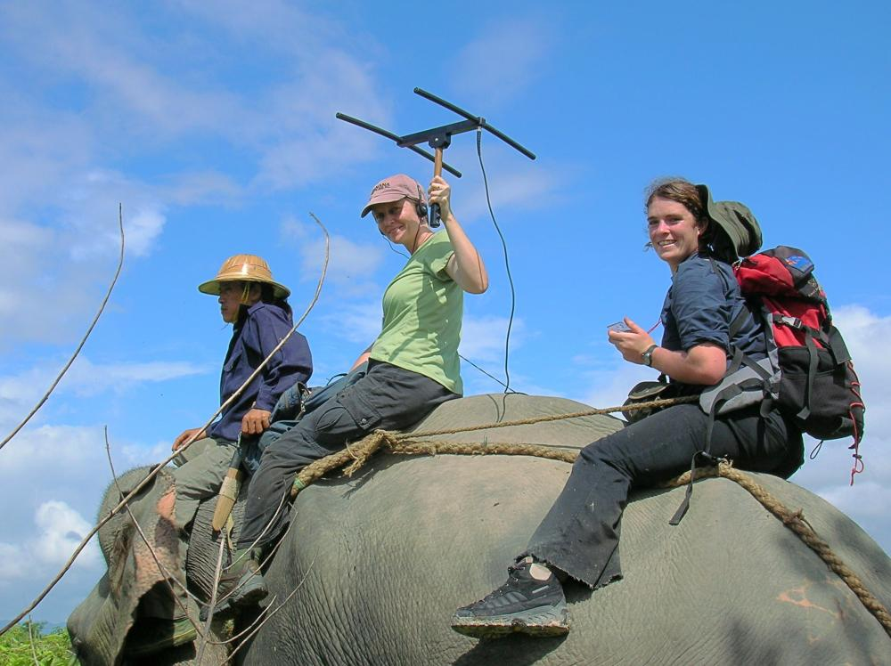 Graduate student Danielle Shanahan and Mel Songer tracking elephants in collaboration with an elephant capture team from the Myanmar Timber Enterprise, the government organization that manages the country's timber elephants. Photo credit Ye Htut.
