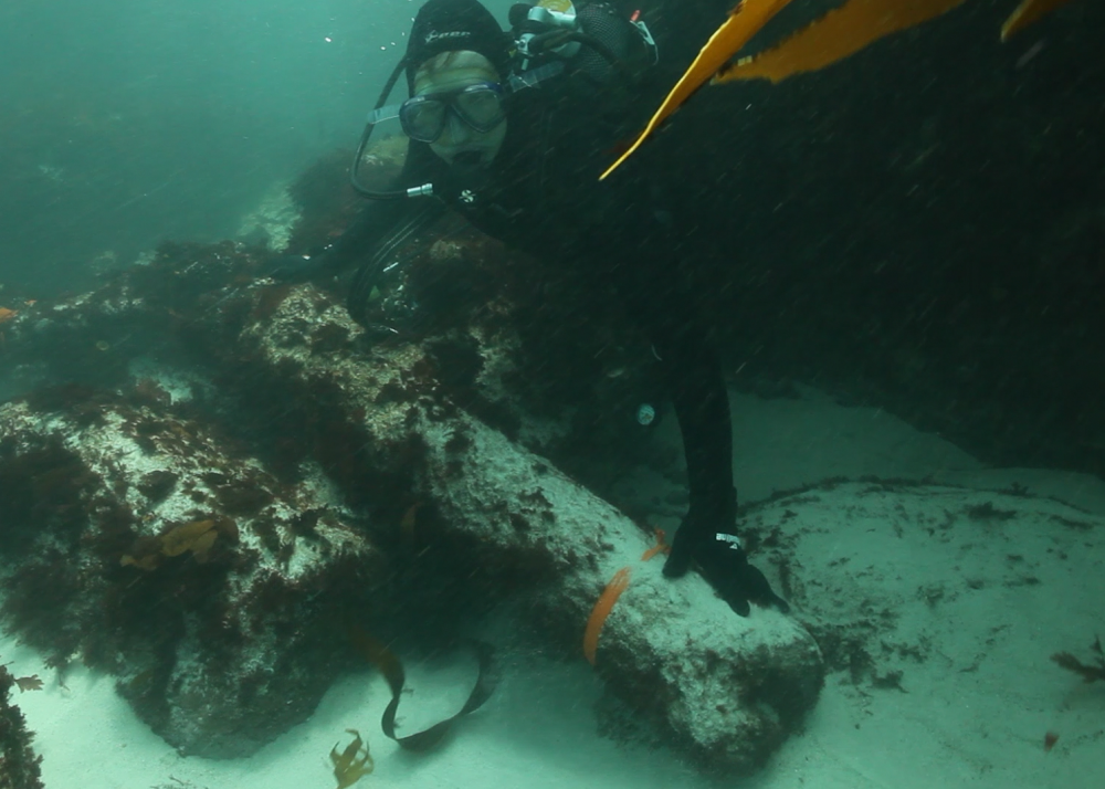 Underwater archaeology researchers identify guns on the wreck of the São José. Credit: Iziko Museums