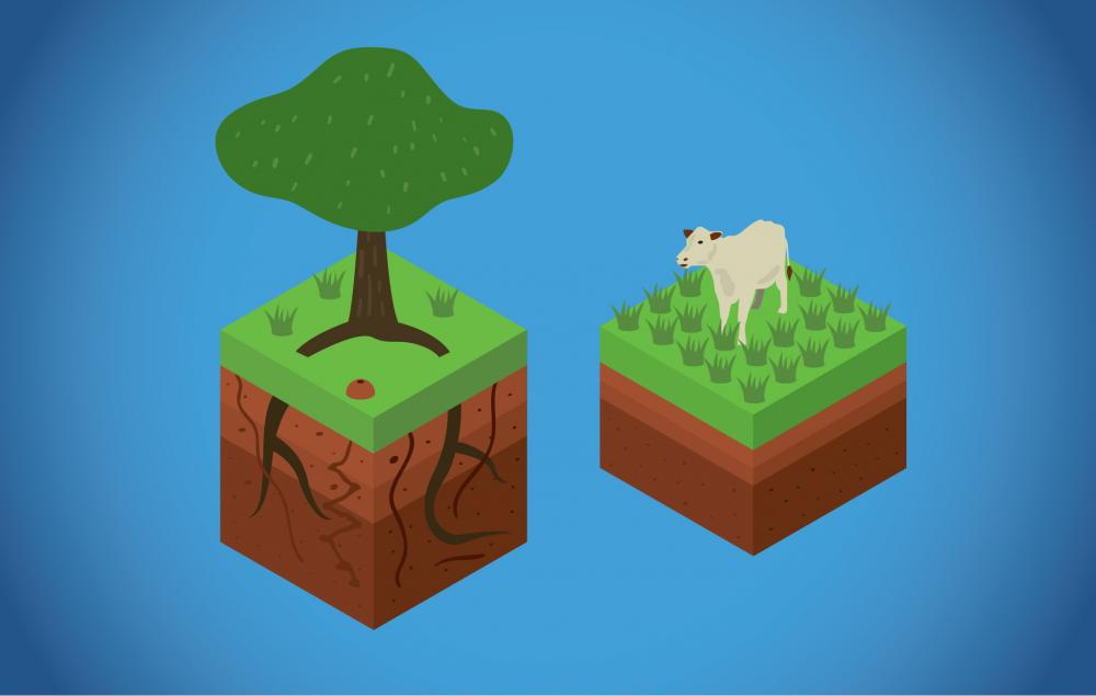Forested soils (left) are more porous than soils in pastureland (right). Scientists have shown that trees can help reduce runoff and increase the amount of soil water flowing into streams during dry periods. Illustration Credit Jorge Alemán.