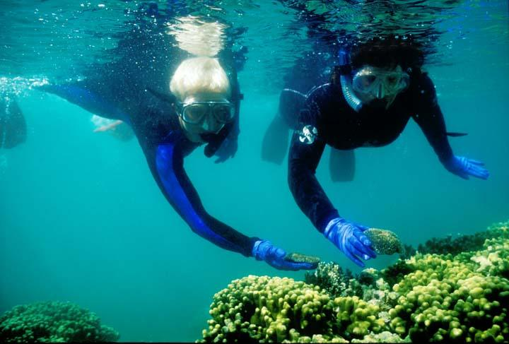 Mary Hagedorn and Ginnie Carter collecting underwater. Photo Credit Jim Daniels.