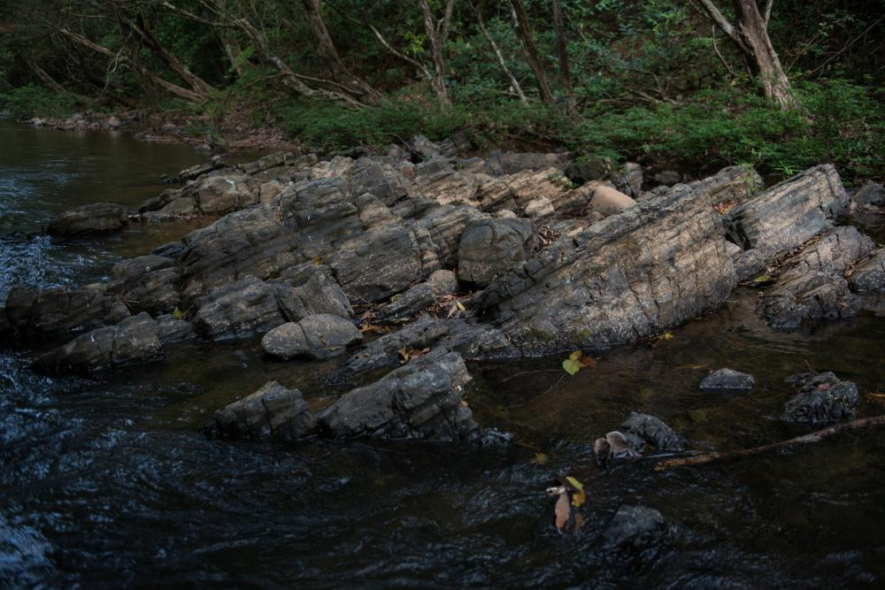 Rocks from the Ocú Formation jut out of the water in Río Palo Seco. Photo credit Sean Mattson.