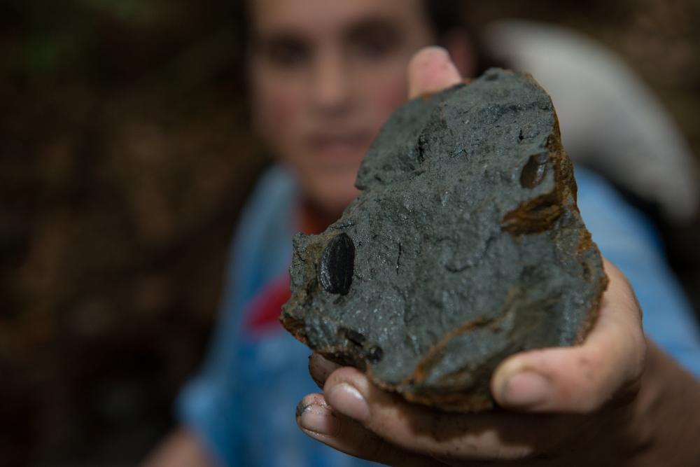 Nicolás Pérez, chercheur associé au STRI, montrant une graine fossilisée vieille de près de 20millions d'années et récupérée sur la formation rocheuse d'un petit ruisseau se déversant dans la rivière de Río Palo Seco.   Crédit photo: Sean Mattson.